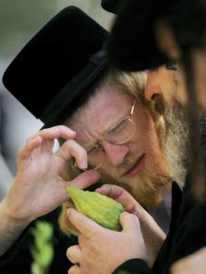 Ultra-Orthodox Jewish men in Jerusalem examine an etrog.