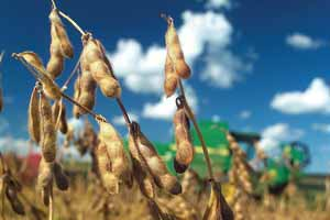 Brazilian President Ignacio Lula da Silva acquiesced to farmers' demands to go ahead with the cultivation and sale of transgenetic soybean crops.