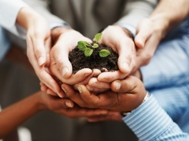 Hands holding seedling in a group